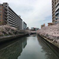 花見コース20170410-1
